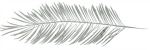 Feather solo 150 wide