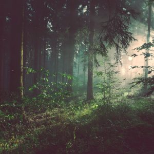 Episode 3: Mythic Living in Challenging Times (& Navigating the Dark Forest)